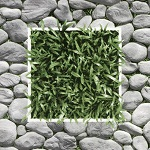 gạch giả cỏ 2