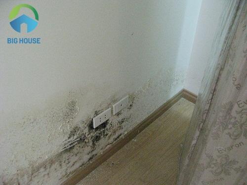 gạch ốp tường chống ẩm mốc